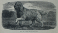 Picture Natural History - No 81 - The Water Spaniel.png