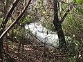 PikiWiki Israel 11936 Banias Nature Reserve.JPG