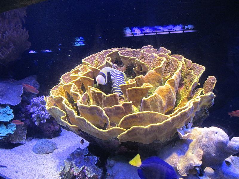 דג בתוך אלמוג