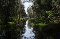 PikiWiki Israel 29554 Hedera forest.jpg