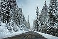 Pine-lined road in the winter (Unsplash).jpg