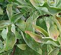 Plant leaves in park in Watchung NJ.jpg