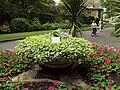 Plants, Hesketh Park 1.JPG