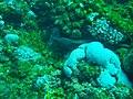 Plongée murène à St Gilles - Ile de la Réunion.jpg