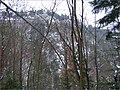 Pohľad na Tomášovský výhľad - panoramio.jpg