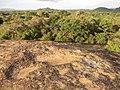 Polonnaruwa, Sri Lanka - panoramio (61).jpg