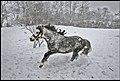 Pony Jimmy - panoramio.jpg