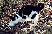 Chat tenant une souris dans sa gueule
