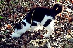 Kot podczas ataku