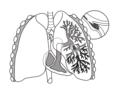Pulmonary-embolism.png