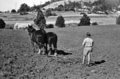 Queensland State Archives 2860 Horse drawn plough Nambour State Rural School 1946.png