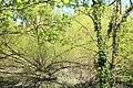 Réserve naturelle régionale du bassin de la Bièvre le 18 avril 2016 - 18.jpg