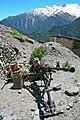 RIAN archive 144534 Machine-gunners in ambush.jpg