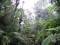 Rain Forest of El Yunque, Puerto Rico.jpg