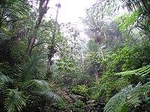 Porto Rico-Flora-Rain Forest of El Yunque, Puerto Rico