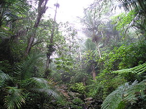 United States National Forest - Rain forest in the El Yunque National Forest, Puerto Rico.