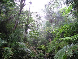 United States National Forest - Rain forest in the El Yunque National Forest, Puerto Rico