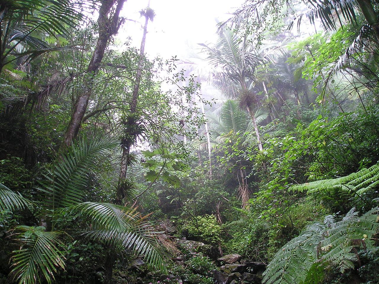 vegetacion del bosque tropical yahoo dating