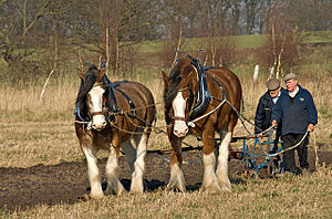 Rainford - Traditional ploughing at Fir Tree Farm