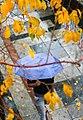 Rainy day of Tehran - 20 November 2011 28.jpg