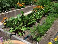 Raised Redwood Gardenbeds 01.jpg