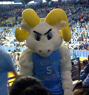Rameses (mascot) - Costumed Rameses at Carmichael Auditorium