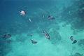 RedSeaEgyptFish.jpg