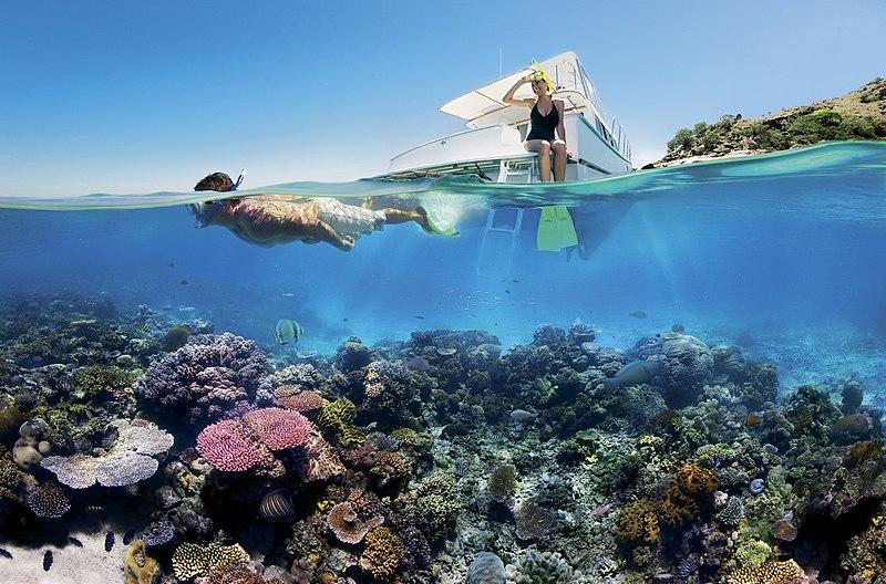File:Reef Snorkelling on the Great Barrier Reef.jpg