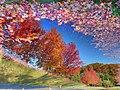 Reflecting on the change of seasons - NJ (3000730729).jpg