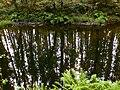 Reflexos no río Mandeo. Aranga. Galicia.jpg