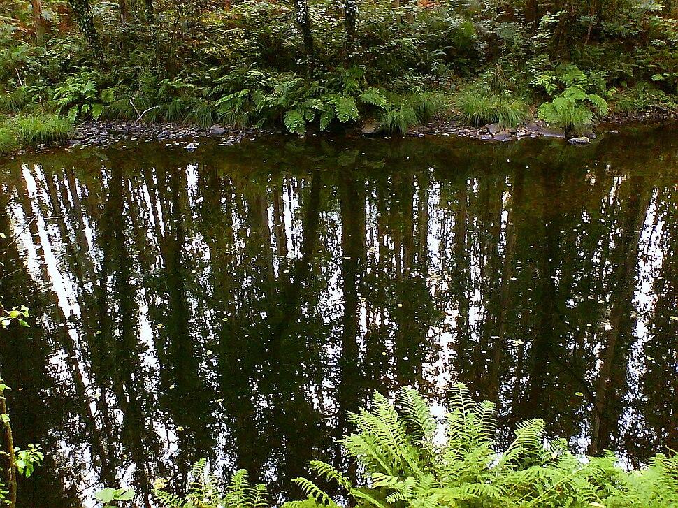 Reflexos no río Mandeo. Aranga. Galicia