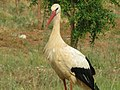 Ria stork.jpg