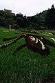 Rice Paddy Field Art in Yonezawa 2015 (19421842532).jpg