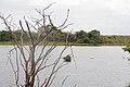 Rio Caroní - Parque Cachamay (Pto Ordáz - Bolivar).jpg