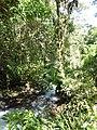 Rio Intag Ecuador 984.jpg