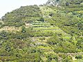 Riomaggiore 387-terracings 1.jpg