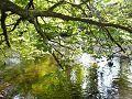 River Faughan.jpg