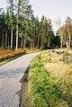 Road near Drummournie - geograph.org.uk - 274864.jpg