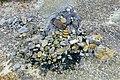 Rocks and stones - Mount Osore - Mutsu, Aomori - DSC00509.jpg