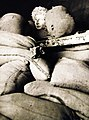 Roman head amid sandbags, Tripoli, Libya, North African Campaign, 1943 (27220471371).jpg