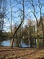 Rombergpark, 08.03.14 - panoramio.jpg