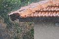 Roof Tiles in the rain.jpg