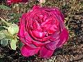 Rosa L. D. Braithwaite 2017-10-02 6823.jpg
