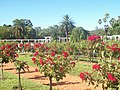 Rosedal Rosas rojas.jpg