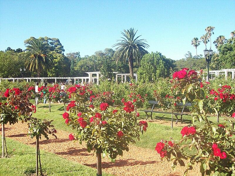 800px Rosedal Rosas rojas ¿Te cansaste de Buenos Aires? Redescubrila.