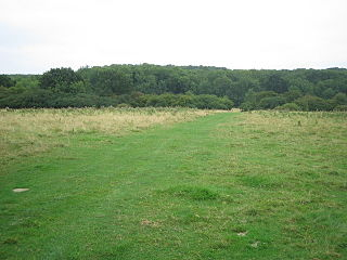 Kings Wood and Glebe Meadows, Houghton Conquest