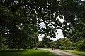 Royal Botanic Gardens, Kew - panoramio (4).jpg