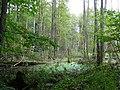 Rozlewisko koło drogi do Leśniczówki Rostek - panoramio.jpg