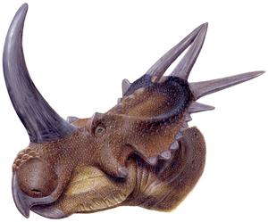 Brachyceratops - Restoration of Rubeosaurus ovatus, the possible adult form