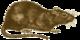 Ruskea rotta.png